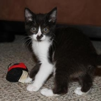Adopt A Pet :: Spring 3 (Yellow Collar) - Baltimore, MD