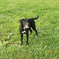 Adopt A Pet :: Natalie - Boston, MA