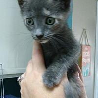 Adopt A Pet :: Mouse - Jacksonville, FL