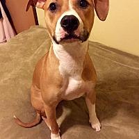 Adopt A Pet :: Xena - West Allis, WI