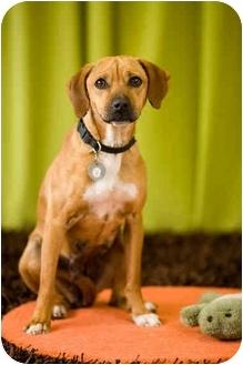 Beagle Mix Dog for adoption in Portland, Oregon - Kadie