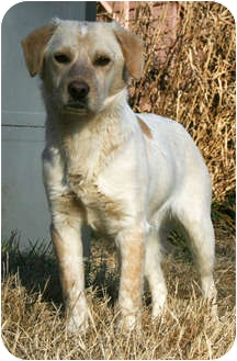 Spaniel (Unknown Type) Mix Dog for adoption in Portland, Maine - Charlie
