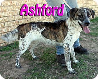 Australian Cattle Dog Mix Dog for adoption in Midland, Texas - Ashford