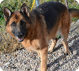 German Shepherd Dog Mix Dog for adoption in Fruit Heights, Utah - Cinnamon