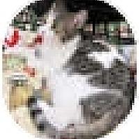 Adopt A Pet :: Paprika - Harrisburg, NC