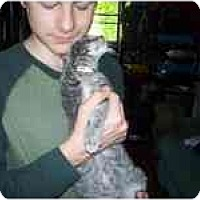 Adopt A Pet :: LV Love Bug - Grand Rapids, MI