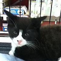 Adopt A Pet :: WILLY - Riverside, RI