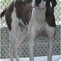 Adopt A Pet :: Bindy - Hubertus, WI
