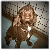 Adopt A Pet :: BEASLEY - Medford, WI