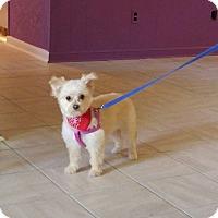 Adopt A Pet :: Lea - Conroe, TX
