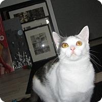 Adopt A Pet :: Felicia - Ashville, OH