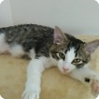 Adopt A Pet :: Lila - McHenry, IL