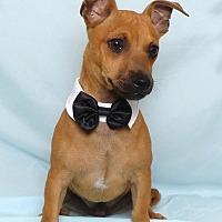 Adopt A Pet :: Felipe - Kerrville, TX