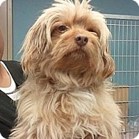 Adopt A Pet :: Shaggy - Encinitas, CA