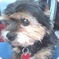Adopt A Pet :: Max - North Benton, OH