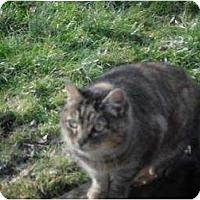 Adopt A Pet :: Troika - Rancho Palos Verdes, CA
