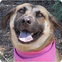 Adopt A Pet :: Faith - Encinitas, CA