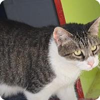 Adopt A Pet :: Dean - New Iberia, LA