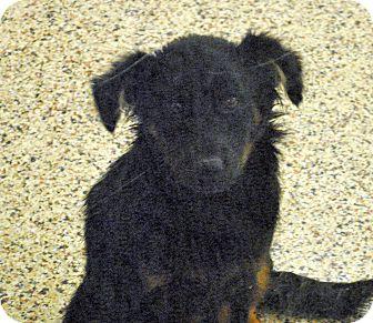 Spaniel (Unknown Type) Mix Dog for adoption in Aiken, South Carolina - Daphne