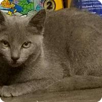 Adopt A Pet :: Tuna - San Fernando Valley, CA