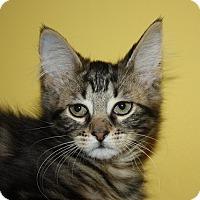Adopt A Pet :: Dixie (LE) - Little Falls, NJ