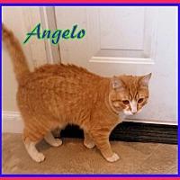 Adopt A Pet :: Angelo - Berkeley Springs, WV