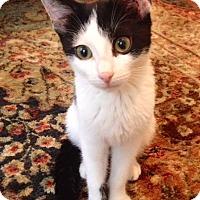 Adopt A Pet :: Blacky Joe - Trenton, NJ
