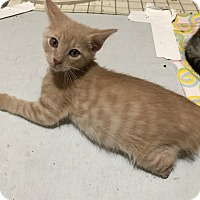 Adopt A Pet :: Ulmer - Colorado Springs, CO