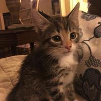 Adopt A Pet :: Maryann - Greensboro, NC
