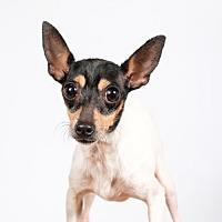 Adopt A Pet :: Cricket - St. Louis Park, MN
