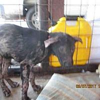 Adopt A Pet :: A292663 - Conroe, TX
