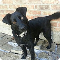 Adopt A Pet :: Maggie*ADOPTED!* - Chicago, IL