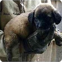 Adopt A Pet :: Brook - New Boston, NH