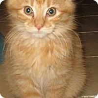 Adopt A Pet :: Moo - Acme, PA