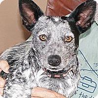 Adopt A Pet :: Dallie - Conway, AR