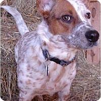Adopt A Pet :: Benny - Siler City, NC
