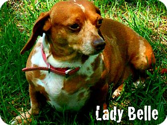 Dachshund Mix Dog for adoption in Columbia Heights, Minnesota - Lady Belle