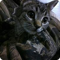 Adopt A Pet :: Dharma - Hamilton, ON