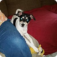 Adopt A Pet :: Winston - Clarksville, TN