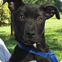 Adopt A Pet :: Jimmy - Orlando, FL