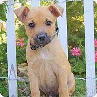 Adopt A Pet :: Heath von Portia - Thousand Oaks, CA