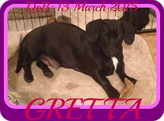 Dachshund Mix Dog for adoption in Albany, New York - GRETTA