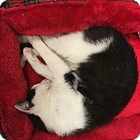 Adopt A Pet :: Max - Simpsonville, SC