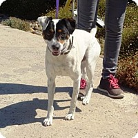 Adopt A Pet :: Jack - Lathrop, CA