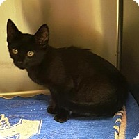 Adopt A Pet :: Ozzy - Americus, GA