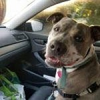 Adopt A Pet :: Duke - Savannah, GA