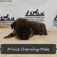 Adopt A Pet :: Prince Charming - Waycross, GA