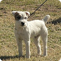 Adopt A Pet :: LILLIE LANGTRY - Scottsdale, AZ
