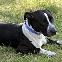 Pointer Mix Dog for adoption in Lorain, Ohio - Ava