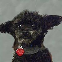 Adopt A Pet :: Fritzie - Codorus, PA